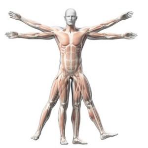 Jak wykonać test ciała/mięśniowy?